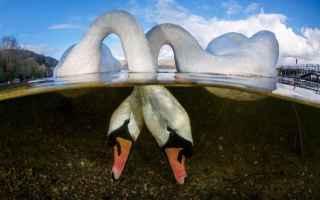 Mostre e Concorsi: concorso fotografia acqua sub