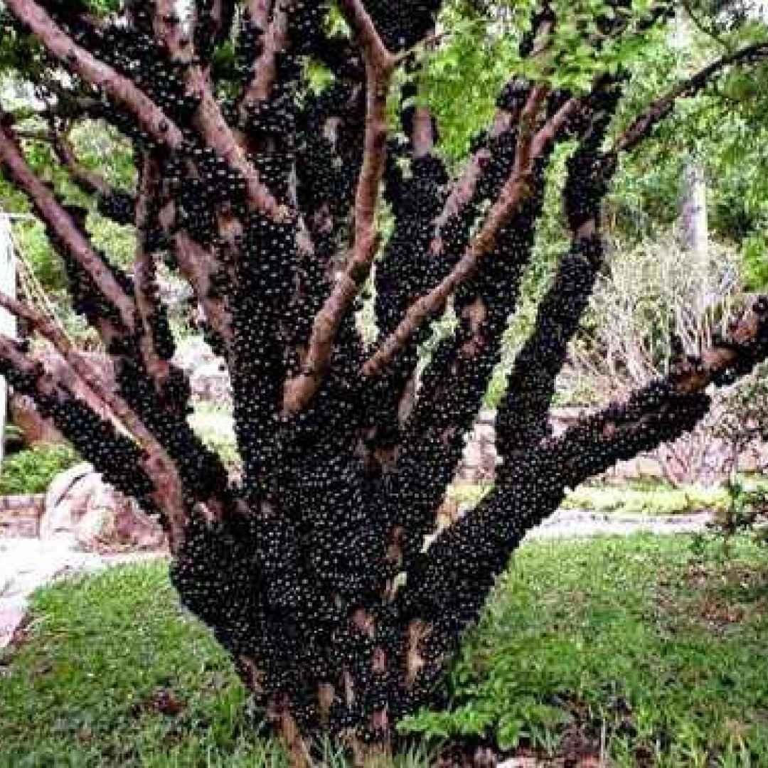 alberi  natura  piante  vegetali  frutta