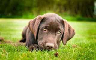 Animali: addestramento cane  cane