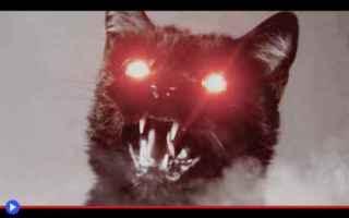 https://diggita.com/modules/auto_thumb/2018/03/16/1622344_Demon-Cat-500x313_thumb.jpg
