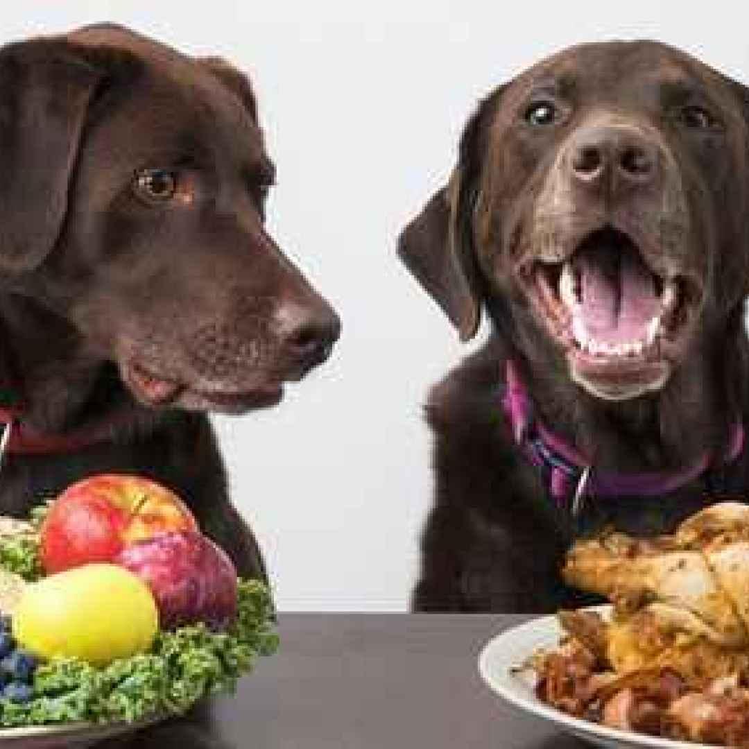 cane  alimenti cani  intolleranze