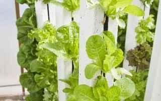 Giardinaggio: Investire in una vertical farm. Tutto quello che occorre sapere.