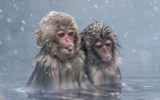 Immagini virali: fotografia  ispirazioni  animali
