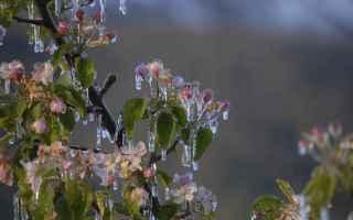 Infinite distese d'incantevoli fiori rosa e bianchi, sono i meleti in Val Venosta che diffondono n