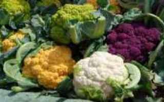 Giardinaggio: cavolo  broccolo  orto  coltivazione