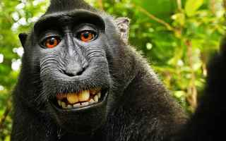 fotografia  scimmia  peta  selfie
