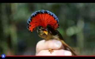 Animali: uccelli  animali  sudamerica  amazzonia