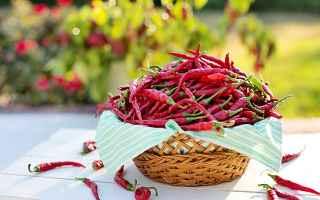 alimentazione  peperoncino  dieta  cibo