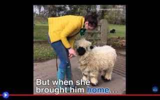 Animali: animali  cani  pecore  strano