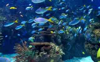 Android: acquario  android  live wallpaper  sfondi