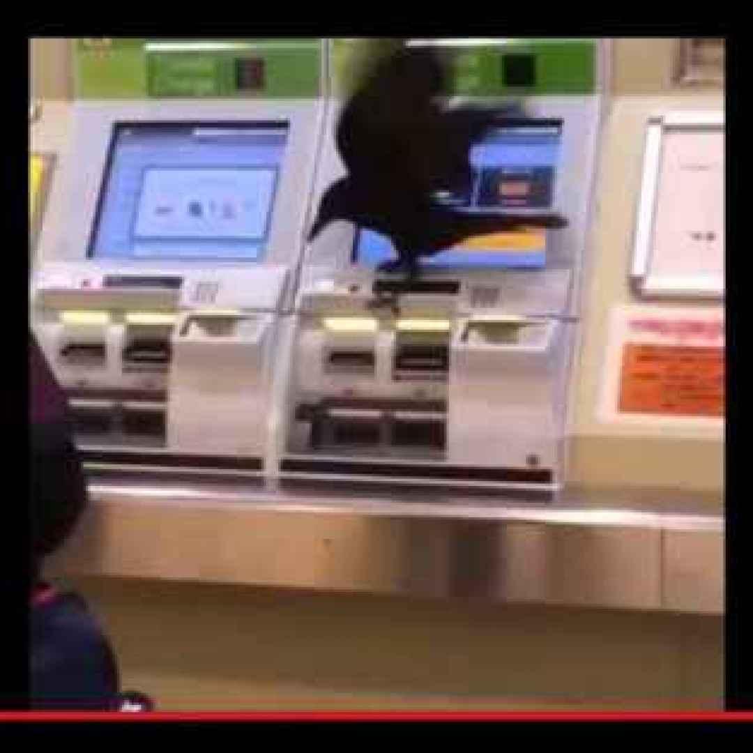 animali  uccelli  corvi  tokyo  giappone