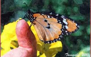Cultura: farfalla  prosa rimata  sentimento