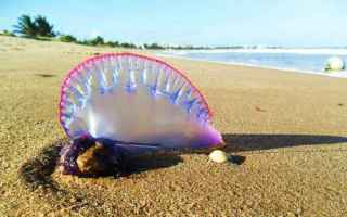 Animali: mare  vacanze  meduse