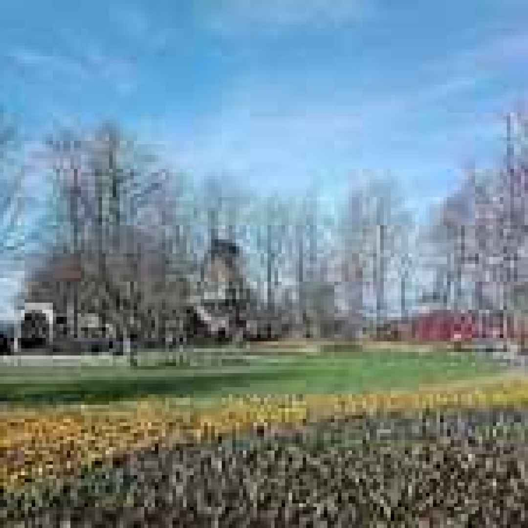 olanda  viaggi  blog  tulipani