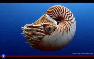 Animali: molluschi  cefalopodi  conchiglie