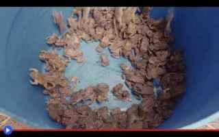 dal Mondo: animali  rospi  anfibi  isole  africa