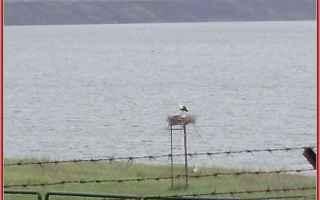 Ambiente: lago  lentini  leone  mito
