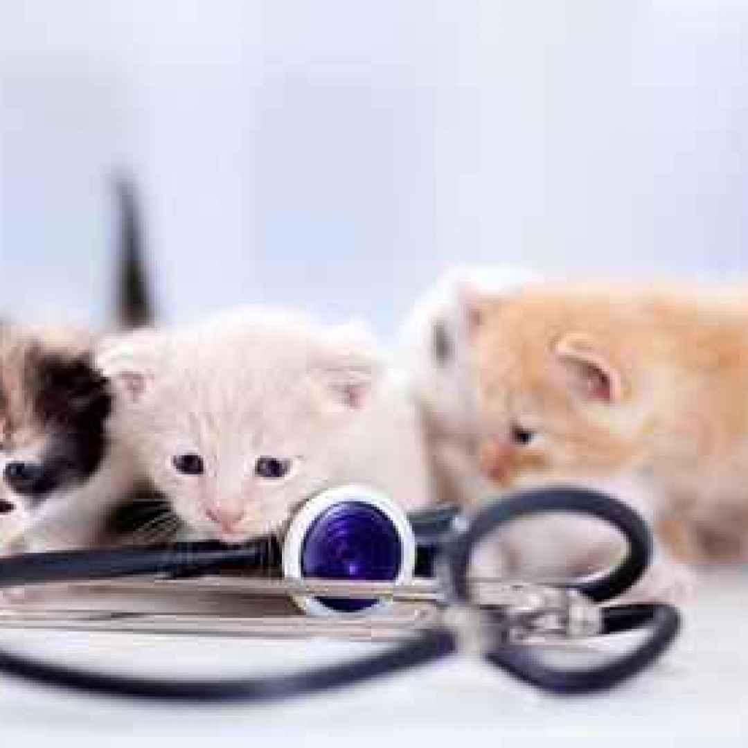 gatto  vaccini
