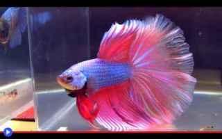 Animali: animali  pesci  allevamento  asia