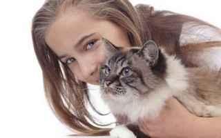 Animali: gatto  fusa gatto