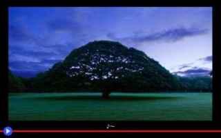dal Mondo: giappone  alberi  piante  vegetali