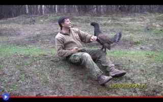 Animali: animali  galli  uccelli  cedroni