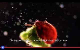 Animali: alberi  natale  natura  microbi