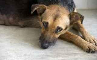 Animali: cane  capodanno  botti