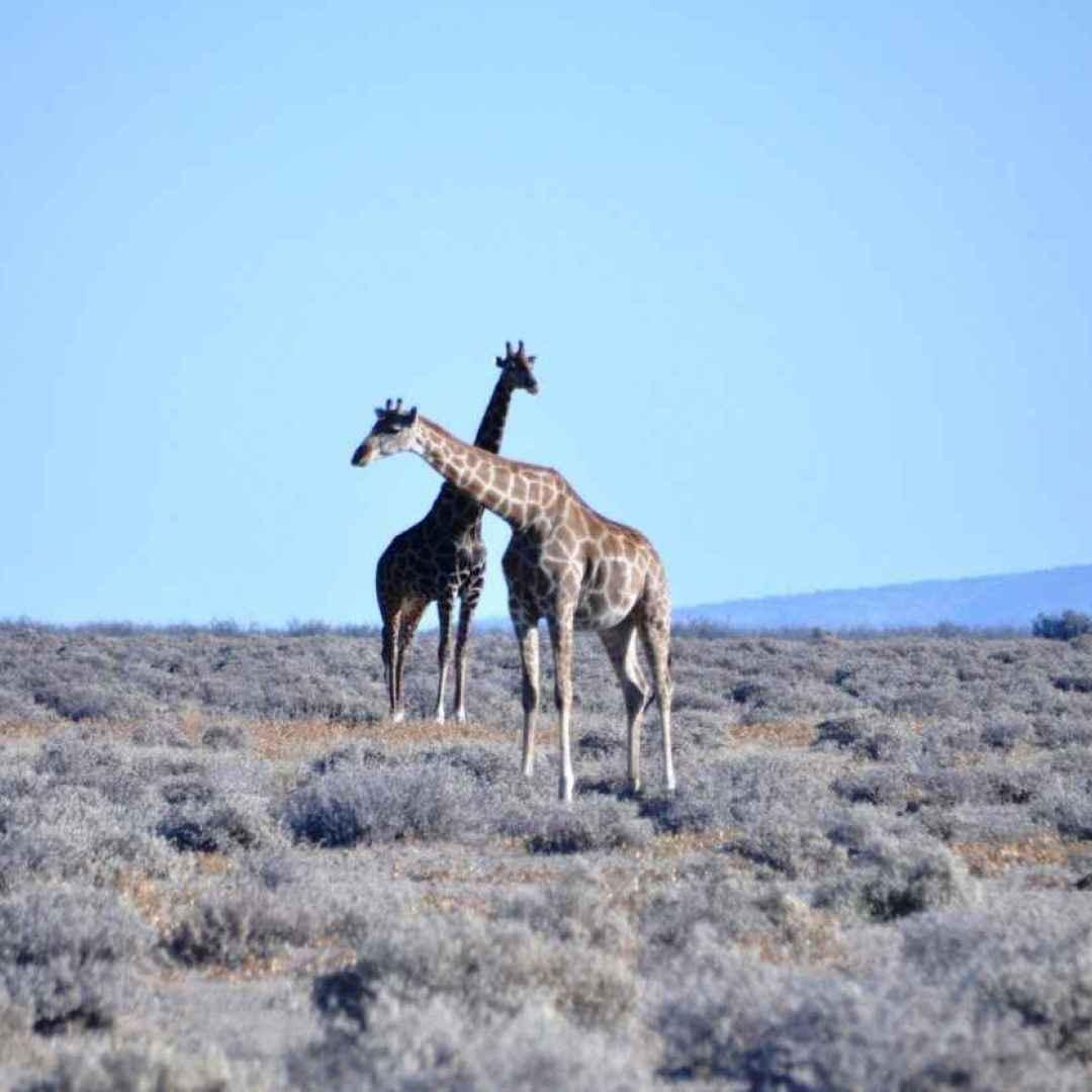 africa  namibia  etosha  parco nazionale