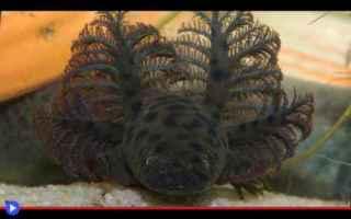 Animali: animali  anfibi  salamandre  florida