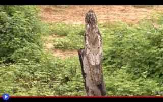 Animali: animali  uccelli  foresta  sudamerica