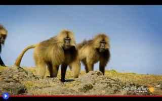 Animali: animali  scimmie  babbuini  africa