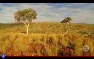 Ambiente: australia  alberi  oro  estrazione