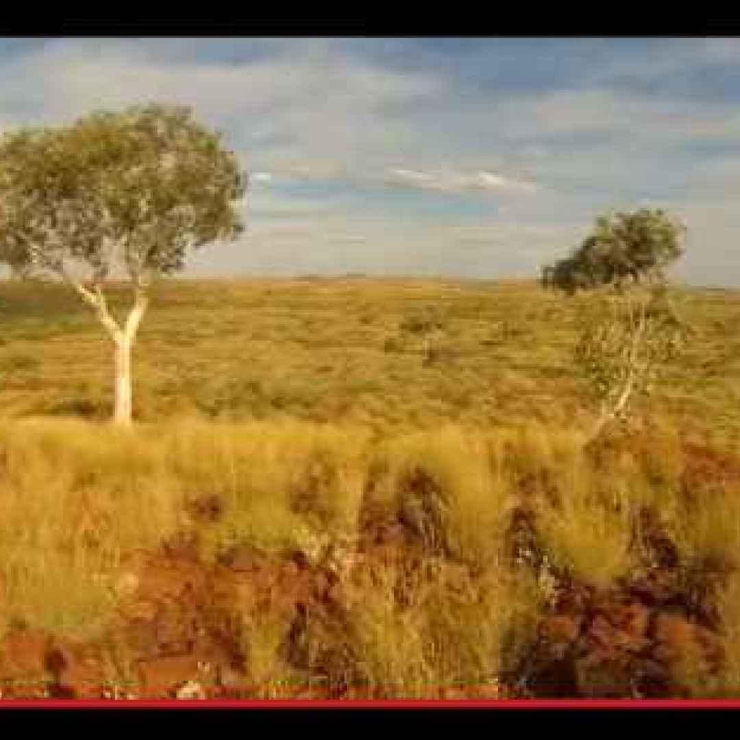 australia  alberi  oro  estrazione