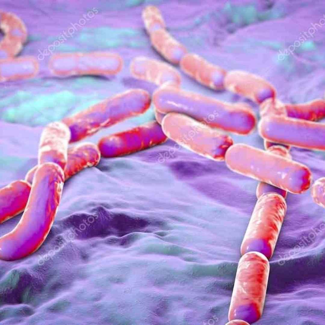 bacillus cereus  sicurezza alimentare  h