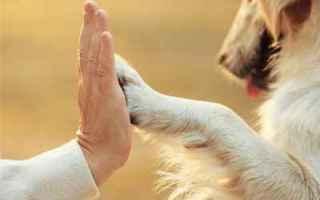 Medicina: anziani  animali  cane