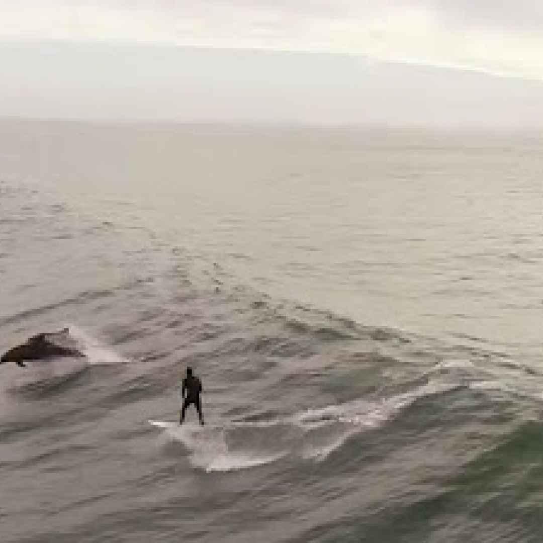california mare delfini video surf