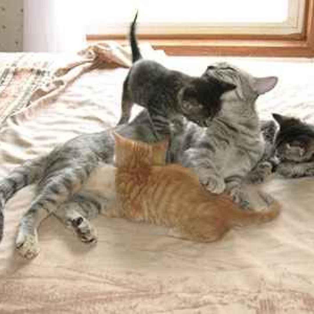 perchè i gatti fanno la pasta