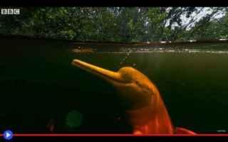 Animali: animali  delfini  creature  leggende