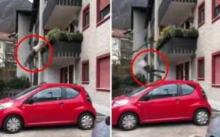 Notizie locali: video shock bolzano video virale