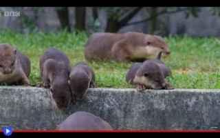 Animali: animali  città  singapore  mustelidi