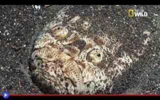 Animali: animali  pesci  fondali  mare  predatori