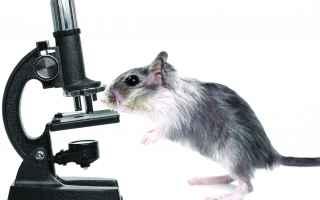 Medicina: cancro  tumore  vaccino