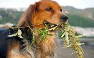 Animali: cane  analisi del sangue
