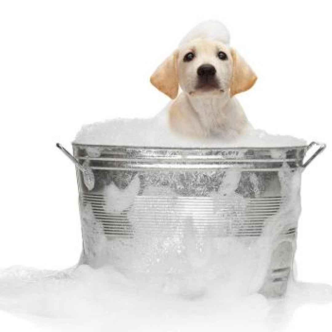 pelo cane bagno pelo morbido