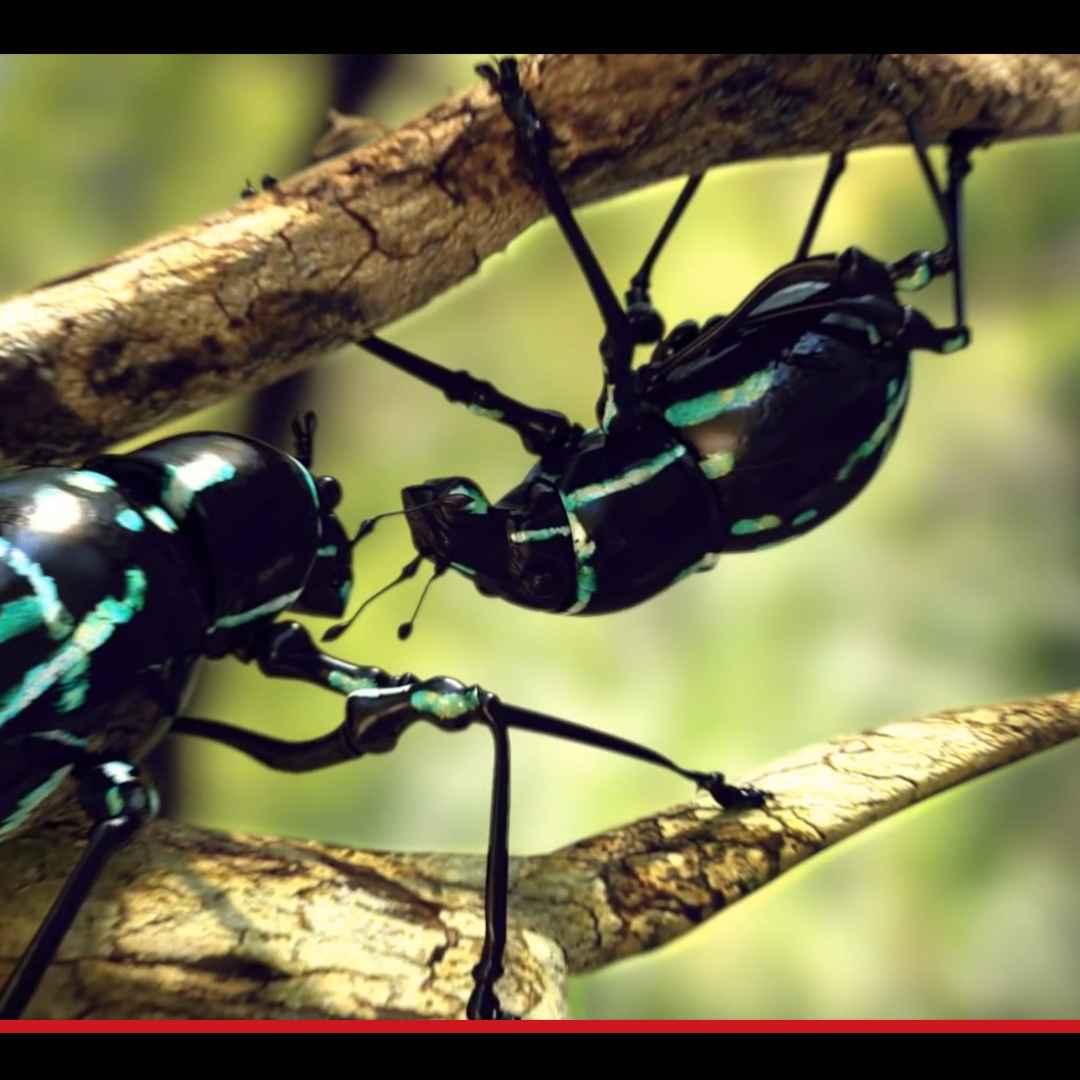 animali  insetti  scienza  biologia