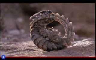 Animali: animali  lucertole  predatori  insetti