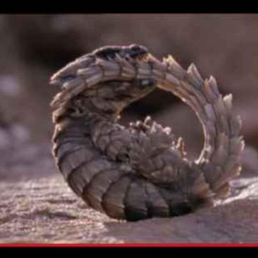 animali  lucertole  predatori  insetti