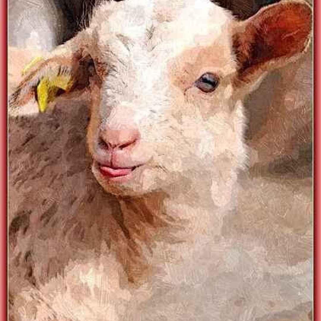 abbacchio  agnello  sacrificio  pasqua