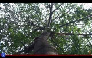 dal Mondo: alberi  vegetali  caraibi  africa
